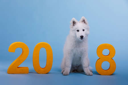 A puppy samoyed sits among the figures. The dog is the symbol of the 2018 New Year.