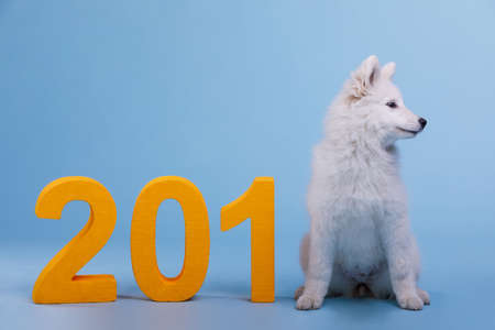 A white fluffy cute puppy of the Samoyed breed sits near the big orange figures and looks to the side. The dog is the symbol of the 2018 New Year.