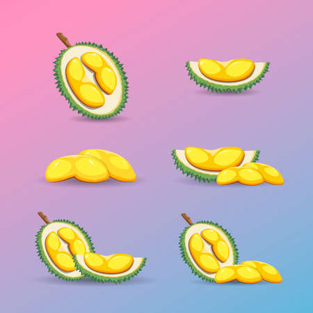Halves of a durian fruit on a purple background. Fresh and organic durian fruit vector illustration.