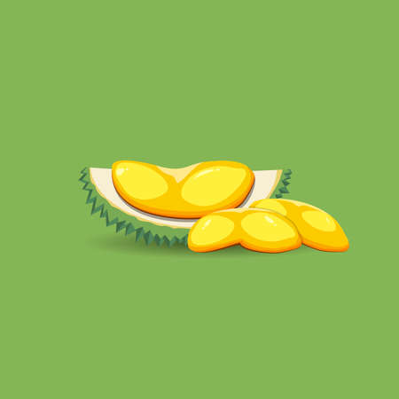 Exotic fruit durian on a green background. A half of fresh, organic and mature durian fruit vector illustration.