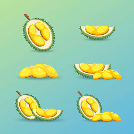 Halves of a tropical durian fruit on a blue background. Illustration
