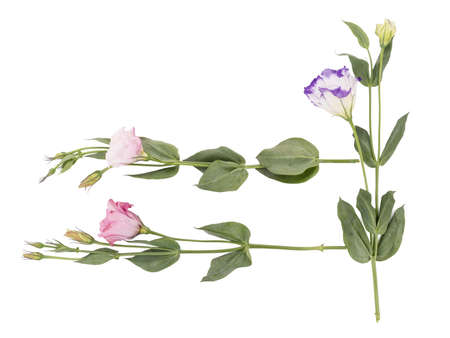 Colorful flowers with leaves isolated on a white background. Nature concept