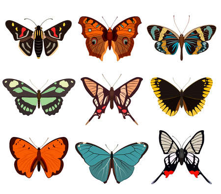 zoology: Realistic butterfly and moth collection isolated on white background vector illustration. Colorful cartoon swallowtail icon set, tropical butterfly design logo. Zoology, biology and exotic wildlife Illustration