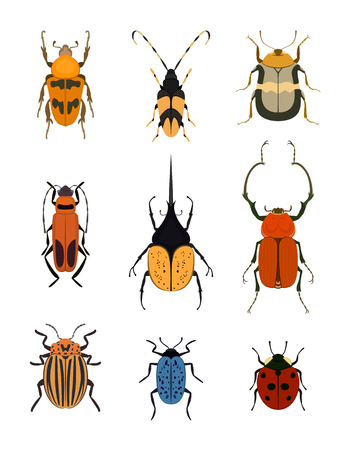 Bug icon set isolated on white background vector illustration. Ladybird, weevil, cockchafer, cockroach, colorado potato beetle. Color cartoon insect design, bug symbol collection, wildlife concept Illustration