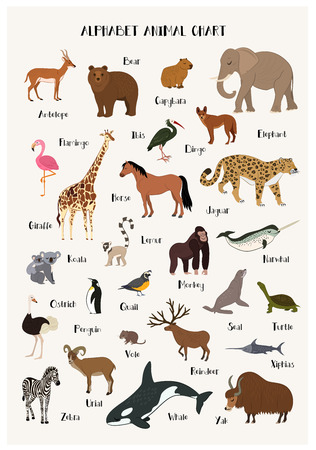 Alphabet animal chart set isolated vector illustration. ABC for kids education in preschool. Zoo animal alphabet chart with panda, urial, vole, reindeer, narwhal, dingo, seal, ibis, zebra, penguin. Vectores