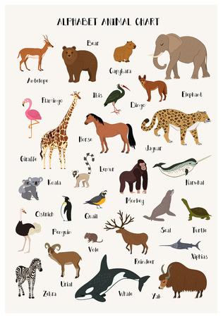 El conjunto animal de la carta del alfabeto aisló el ejemplo del vector. ABC para la educación de los niños en el preescolar. Gráfico del alfabeto del animal del zoológico con el panda, urial, campañol, reno, narval, dingo, sello, ibis, cebra, pingüino. Foto de archivo - 70185854