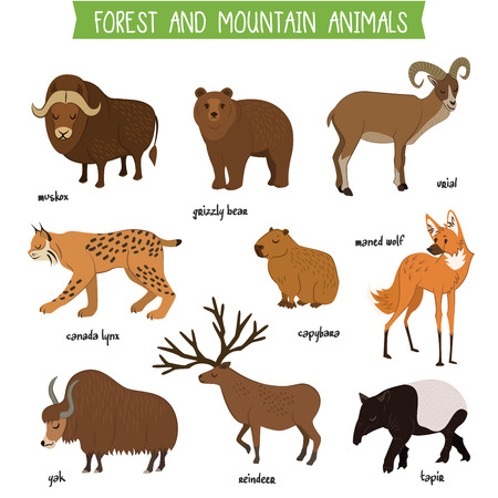 the lynx: Forest and mountain animals set isolated vector illustration. Muskox, grizzly bear, urial, lynx, capybara, wolf, tapir, reindeer, yak in cartoon style. Forest and mountain wildlife animals collection