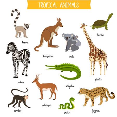 Tropical animals set isolated vector illustration. Zebra, monkey, lemur, kangaroo, koala, alligator, antelope, giraffe, jaguar, turtle and snake in cartoon style. Wildlife tropical animals collection.