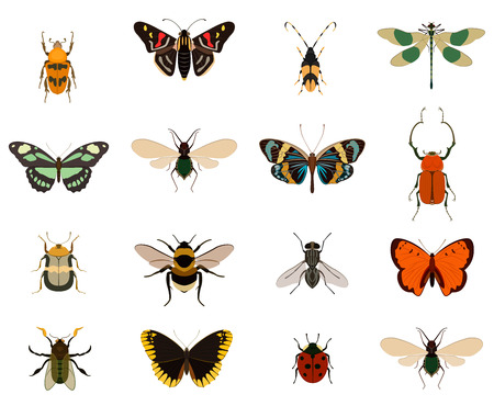 Colorful butterfly and bug collection isolated on white background vector illustration. Swallowtail, ladybug, cockchafer, beetle, swallowtail, dragonfly, fly, bee, bumblebee, cockroach. Insect symbols