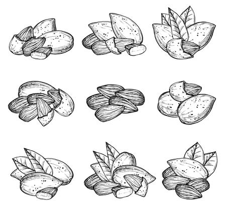 Amandelvector op witte achtergrond wordt geïsoleerd die. Gegraveerde vectorillustratie van bladeren en noten van amandel. Vector Illustratie
