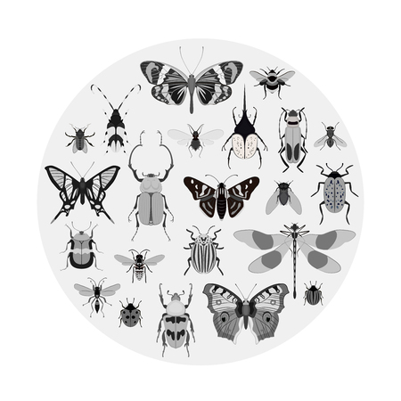 Monochrome butterfly and bug collection isolated on white background vector illustration. Butterfly, ladybug, beetle, bee, swallowtail, dragonfly, wasp, fly, cockroach, weevil. Insect bug symbol set Illustration