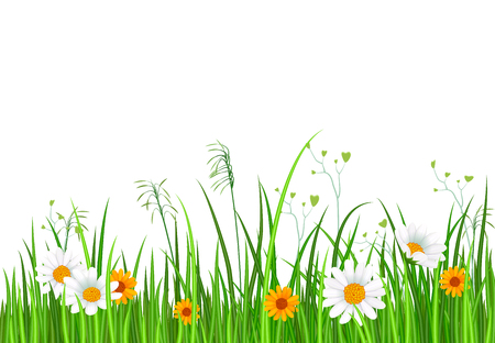 Green nature border with grass and chamomile flowers