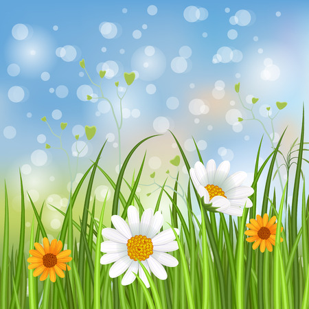 daisy wheel: Spring banner with blooming chamomile flower and green grass on blurred background vector illustration. Floral decorated spring design for holiday, romantic celebration card, spring meadow template