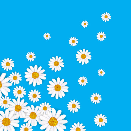 daisy wheel: Spring background with blooming chamomile