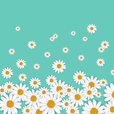 daisy wheel: Spring background with blooming chamomile flower vector illustration. Floral decorated spring design, romantic celebration template, feast congratulation, nature seasonal flowering backdrop Illustration