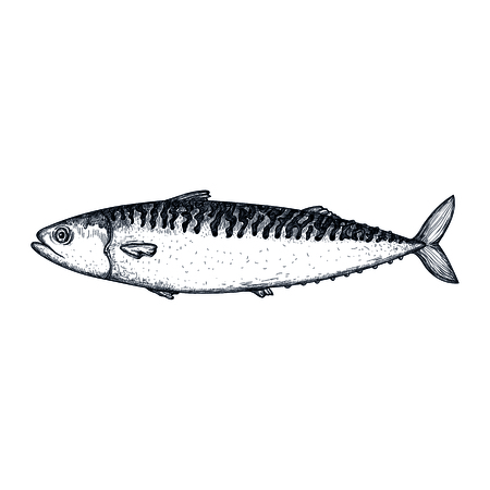 Mackerel fish hand drawn icon. Natural fresh seafood sketch, restaurant menu vintage element, healthy food vector illustration isolated on white background.