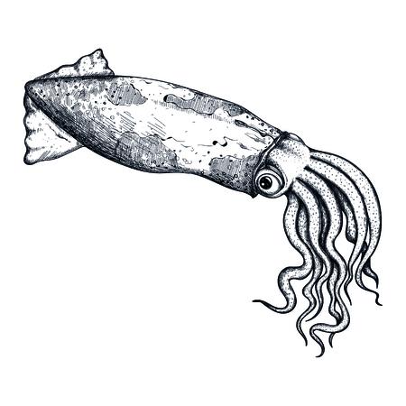 오징어 손으로 그려진 된 아이콘입니다. 자연 신선한 해산물 스케치, 레스토랑 메뉴 빈티지 요소, 건강 식품 벡터 일러스트 흰색 배경에 고립.