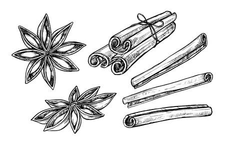 Cinnamon and star anise vector isolated on white background. Engraved vector illustration of different cinnamon sticks Ilustração