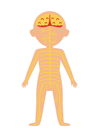 Boy Body Anatomy With Nervous System Health Medical Icon Internal