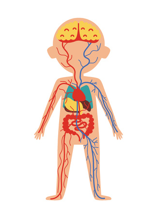 Boy body anatomy with internal organs. Health medical icon, human body physiology isolated on white background vector illustration. Stock Illustratie