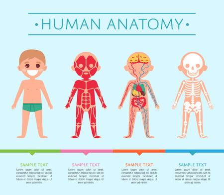 Menselijke anatomie medische poster met kind. Mannelijk skelet, spieren, bloedsomloop, zenuwstelsel en spijsvertering. Interne organen van jongen, menselijk lichaam fysiologie infographic vectorillustratie.
