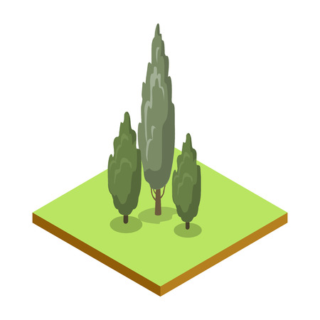 Poplar tree isometric 3D icon. Public park plant and green grass vector illustration. Nature map element for summer parkland landscape design.