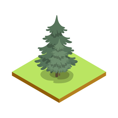 Pine tree isometric 3D icon. Public park plant and green grass vector illustration.  イラスト・ベクター素材