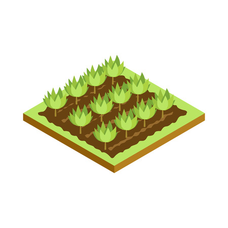 Seedlings on bed isometric 3D icon. Public park plant and green grass vector illustration.