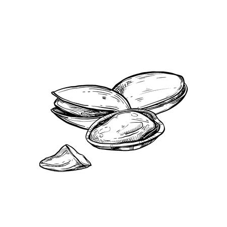 Pistachio vector isolated on white background. Stock Illustratie