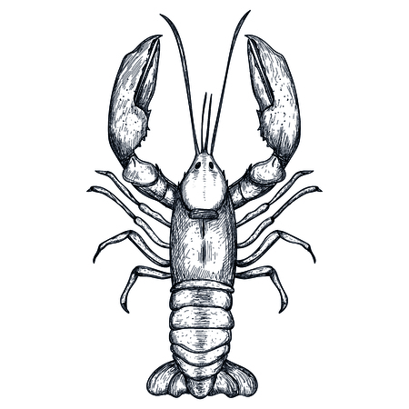 Lobster hand drawn isolated icon