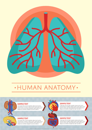 Human anatomy medical poster with internal organs