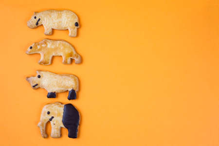 small group of objects: Animal shaped cookie and orange background