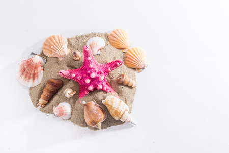 starfish and shell on sand isolate on white. concept summer time