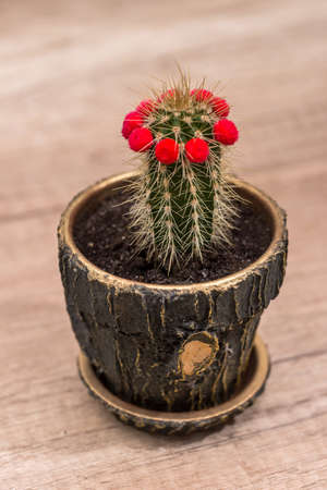 cactus with a red flower on desk