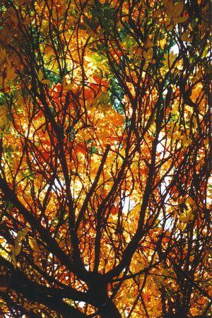 Fall tree Stock fotó - 3925953