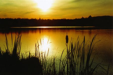 Lake Sunset with Cattails Stock Photo