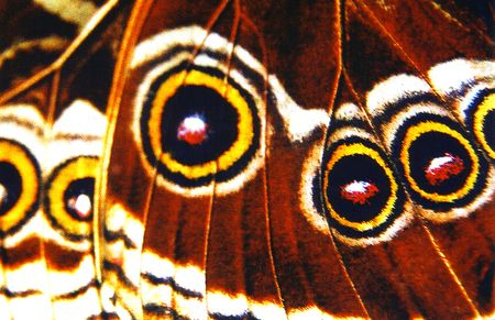 Macro butterfly wing Stock Photo