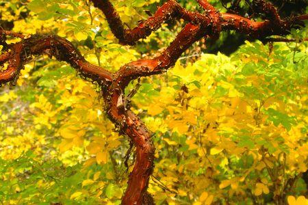 gnarled: Gnarled Fall Tree