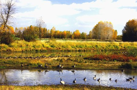 Wetlands Landscape with Waterfowl