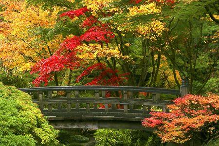 fall garden: Footbridge Among Fall Trees