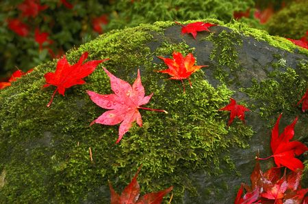 Moss and Leaf Covered Rock photo