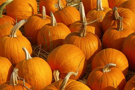 Farm Pumpkin Group