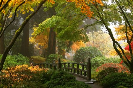 ponte giapponese: Nebbia e fogliame caduta nei giardini giapponesi