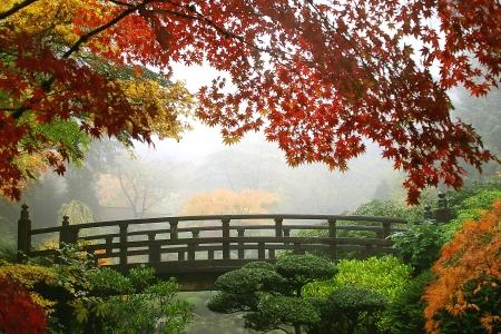 ponte giapponese: Fall Misty Morning in giardini giapponesi di Portland