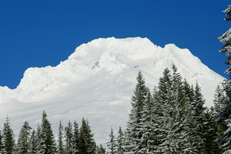 Mt. Hood surrounded by snowy trees Stock Photo