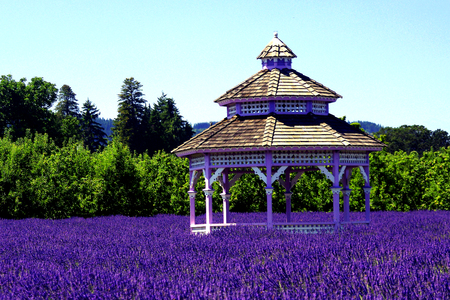 herbs of provence: Gazebo in a Lavender Field