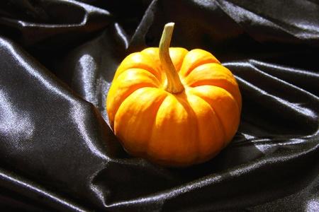 Mini Pumpkin on Black Satin