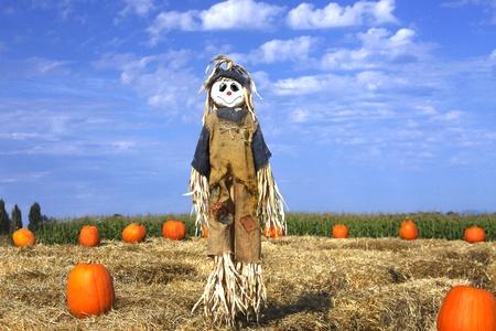 espantapajaros: Espantapájaros en una granja de calabaza