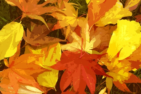 Dry Brush Fall Leaves photo