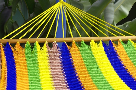 nestled: Striped Hammock Nestled in Palm Leaves